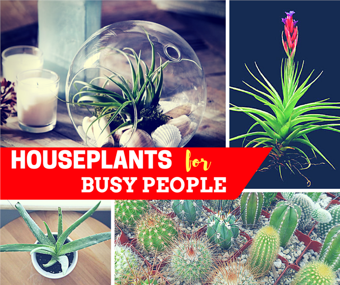 Collage image of 4 photos illustrating easy-care houseplants