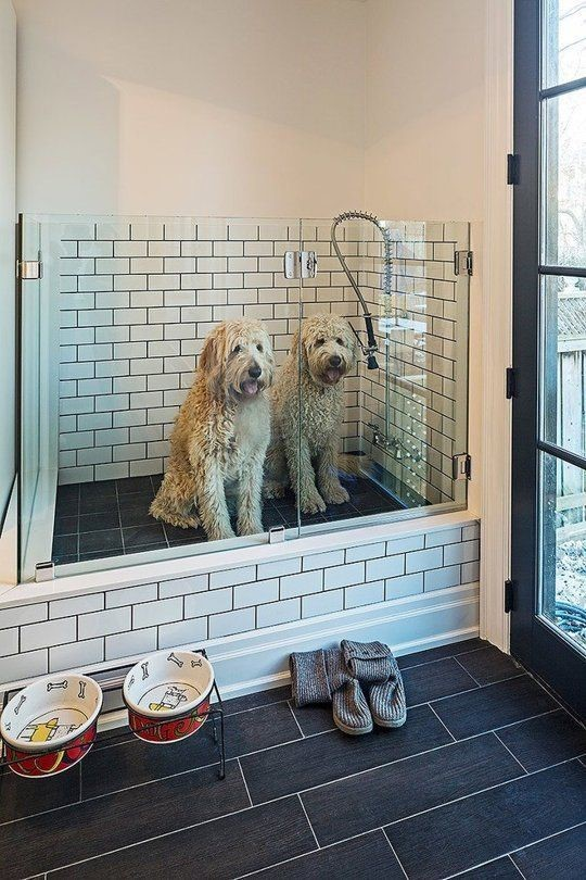 Two dogs in a home's dog shower