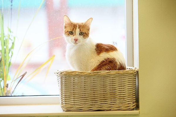 A cat looking out from a woven basket on a windowsill