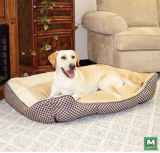Yellow Labrador Retriever in a self-warming dog bed