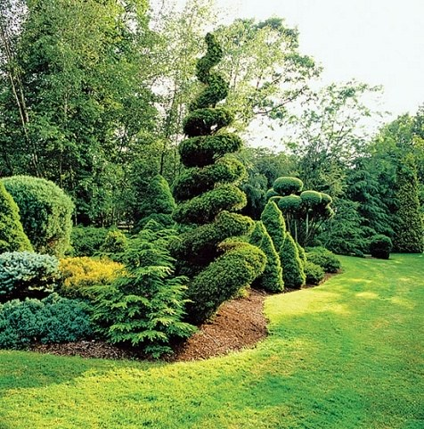 Fine examples of topiary in the home landscape.