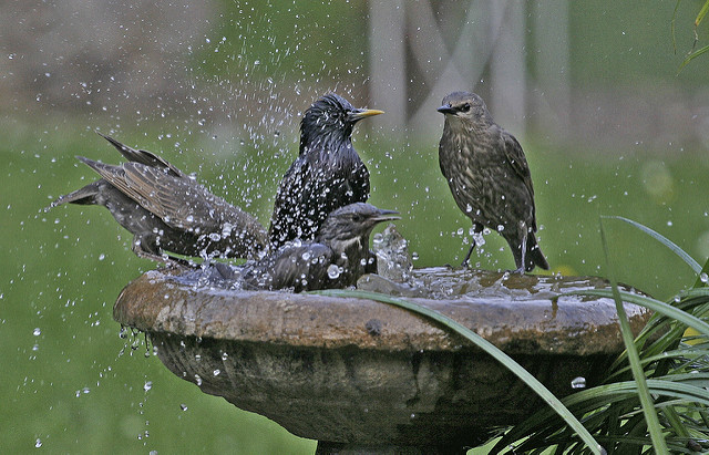Bird bath with birds