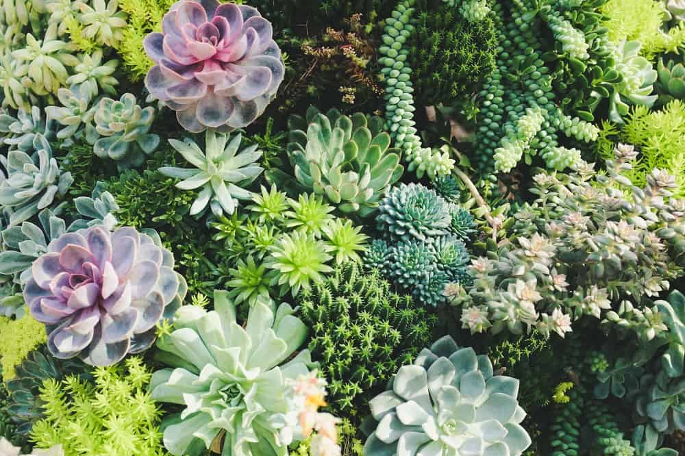 Colorful desert plants can really make a succulent landscape stand out.