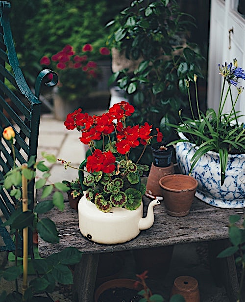 Flowers and planters in a small yard