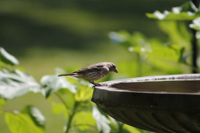 Bird bath with bird in garden