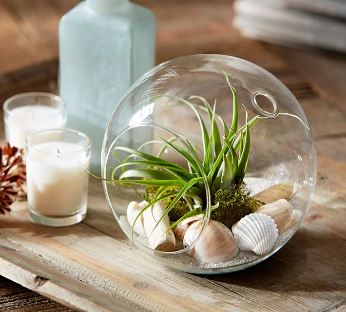 Air plant in terrarium