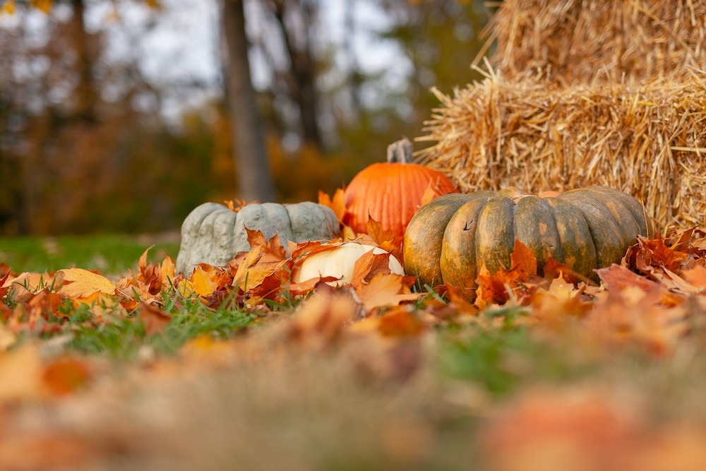 Pumpkins, gourds, and hay for Halloween decorating