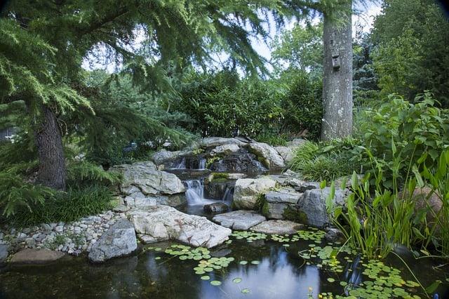 Backyard nature scene with pond