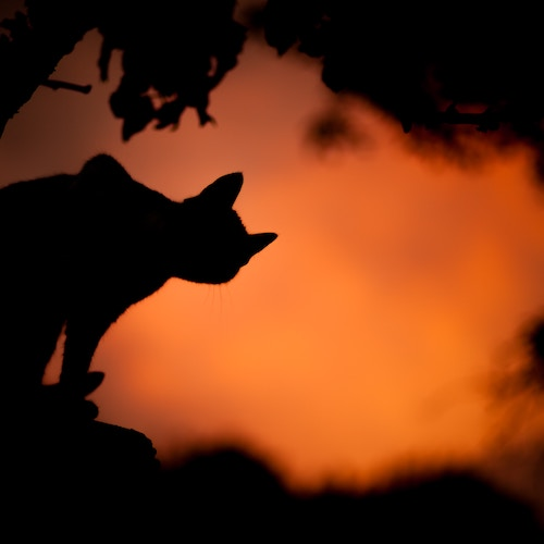 Silhouette of cat for Halloween